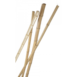 Latte de Bambou Naturel